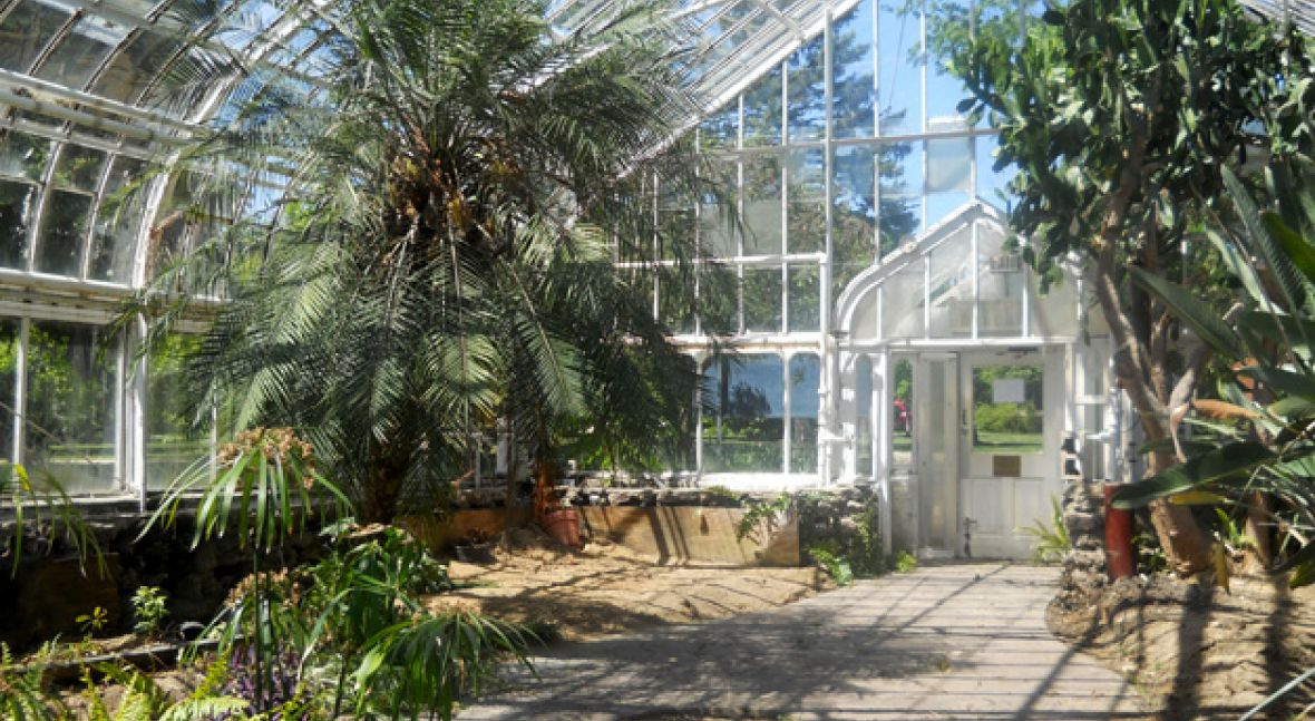 Wilder Park Conservatory & Greenhouse Restoration - Where Did The Plants Go?